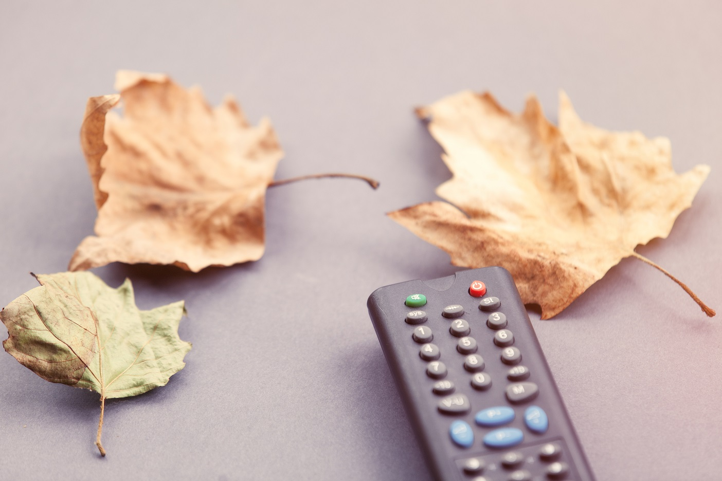 TV remote control and autumn leafs on grey background